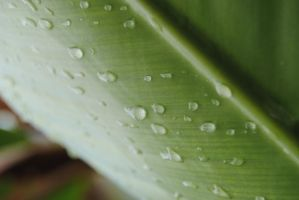 rain drops by AngelicPicture