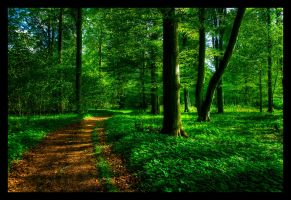 Forestroad by stryder99