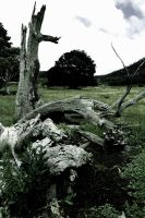 Local Stock: Tree Burial by Beyond-Oddities