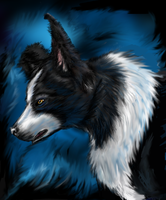 Dark border collie by Kenaragirl