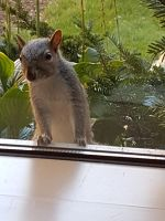 A squirrel walked up to a window at college... by sammy-the-sam