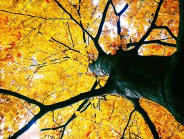 .: autumn tree 2 :. by all17