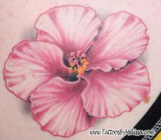 Pink Hibiscus by Melissa-Capo