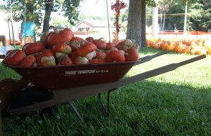 Wheelbarrow full of Pumpkins STOCK by KarahRobinson-Art