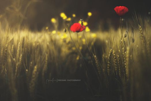 My poem of red by Piroshki-Photography