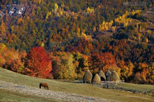 Autumn colors in Apuseni Mountains 21 by adypetrisor
