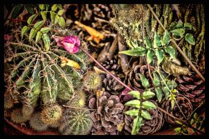 The Cactus by RiegersArtistry