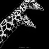 Giraffa - In Love V by NicolasEvariste