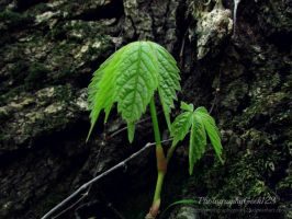 .:Magic Forest:. by PhotographyGeek123