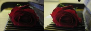 Piano Rose 1 - 3D by ArcadianSpaceship