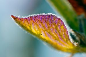 GLORIOUS LAVENDER LEAF by Sandy33311