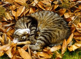 Furball in the leaves by Rynorean
