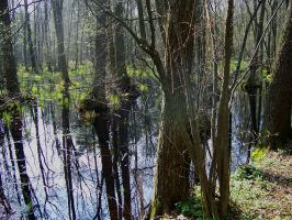 Swamps IV by Vrolok-stock