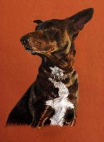 black dog with cross on the chest by zileart