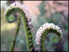 ~ Scorpion Weed ~ by soumya-digi