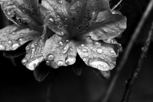 After the Rains I by Januine
