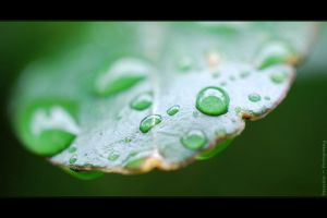 Wet and Dry by DPasschier