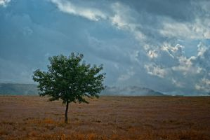 Lonely tree by Bomb-Creator