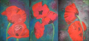 Red, red poppies by Cenestelle