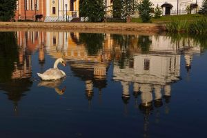 swan. evening in the monastery pond by Nickdan