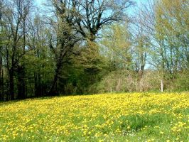 Dandelions by WendyMitchell