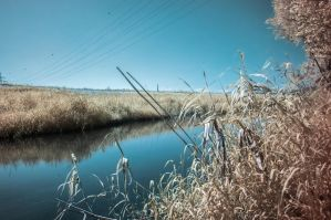 Infrared Grass by Tschisi