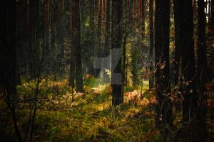 spring in forest by jamesdean26
