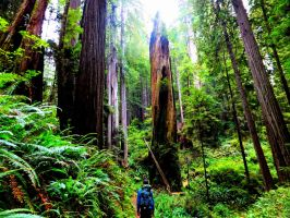 Hiking the Redwoods by bootlacephotography