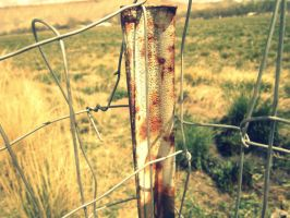 Fence by Pidon-animal