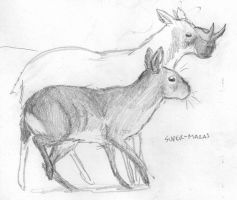 Cursorial rodent sketch by povorot