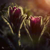 same other world... by ildiko-neer