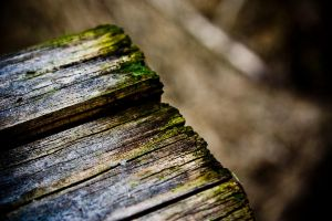 Old Plank by ride4fun
