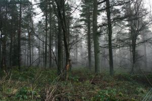 misty forest stock 2 by mordachaistock