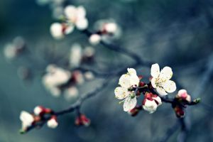 spring by lisans