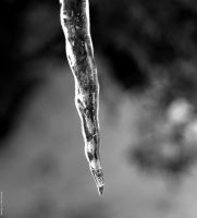 Icicle by WickedOwl514