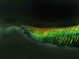 ...:: Peacock Feather ::... by shanty4u