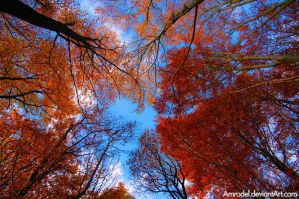 Autumn Trees by amrodel