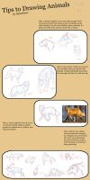 Beginners Guide to Animals by AlphaShasa