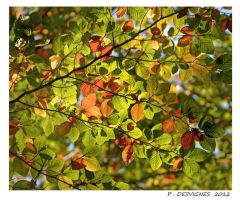 autumn leaves by bracketting94