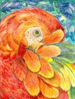 Red Parrot by calzephyr