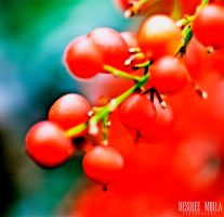 BERRIES II by Dezziree