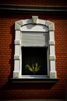 The window by MDelicata
