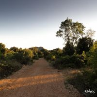 Le chemin by rdalpes