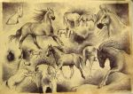 All about horses... by makota