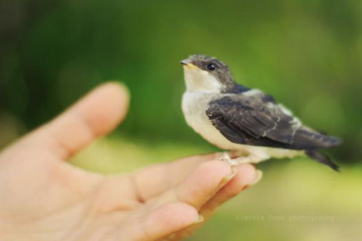A Bird In Hands by eugene-dune