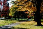 Fall Campus by Evanescent-Chaos