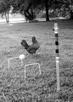 gaming chicken black'n'white by noiselessness