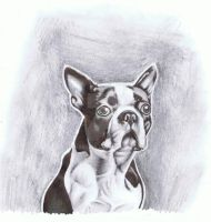 boston terrier by smartink