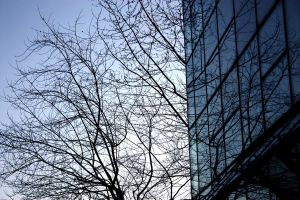 Tree and Building by Marz-2292