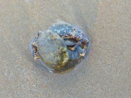 Crab hugging a rock by BlackFireDesign